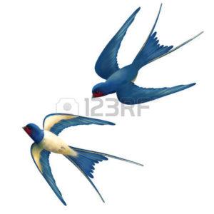 38982309-vector-dva-létající-vlaštovky-na-bílém-pozadí