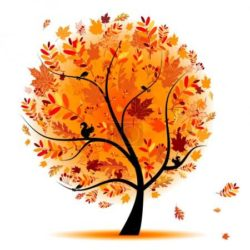 FotkyFoto_krasny-podzimni-strom-pro-navrh_3847043