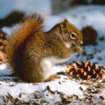 squirrel4_1600x900ms