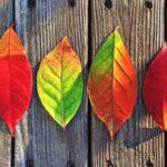 """Týden od 5.10.-9.10.2020 - ,,Barvy podzimu"""""""