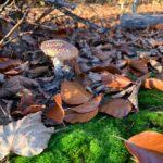 Anežka - houby 8 (1)