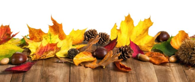 podzim obrázek