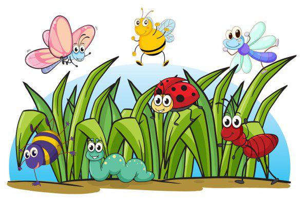 hmyz-v-trave