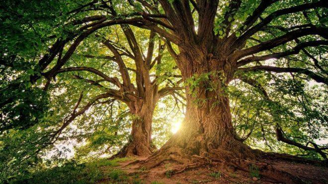 crop-332422-tree-3822149-1280_960x540